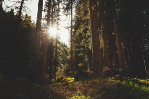 wood-nature-sun-forest